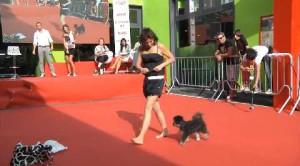 Moonwalk a quattro zampe: ecco il cane ballerino!