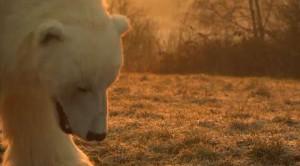 'Fortitude': un orso per le strade di Londra