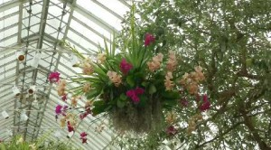'The Orchid Show: Chandeliers'. A New York � gi� primavera!