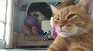 Yoga: la posizione del Gatto