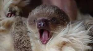 Edward mani di bradipo