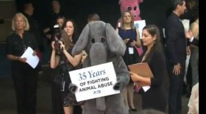 PETA: 35 anni dalla parte delgli animali